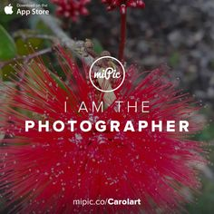 miPic is a social marketplace for artists & photographers to print, share & sell their pictures as beautiful art, fashion and lifestyle products Red Flowers, Fashion Art, Cool Art, App, Gallery, Awesome, Artist, Check, Pictures