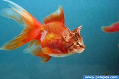 catfish, um,um,good.