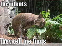 Cats and their damned plants