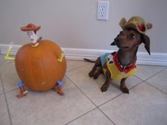 Sausage dressed as Woody from Toy Story (Halloween 2011)