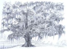 Hebert's Oak by Ty Southerland