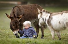Honestly, how could you be?   Miniature Donkeys Are The Best Friend Anyone Ever Had