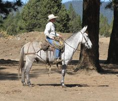 Michael Mastagni Mule Company