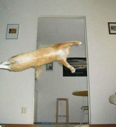 Flying cat no 2. Cat Photos Taken At Just The Right Moment