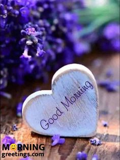 Lovely Good Morning Images, Good Morning Nature, Good Morning Handsome, Latest Good Morning, Good Morning Images Download, Cute Good Morning, Good Morning Photos, Good Morning Flowers, Goog Morning
