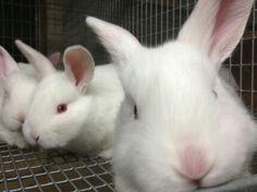 Our new member of Rabbit family.  :*