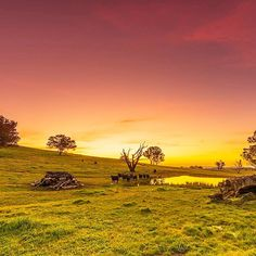 This stunning sunset captured just outside of Canberra by Instagrammer travislongmore is picture perfect! #visitcanberra