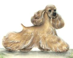 Cocker Spaniel Print of Painting Buff Gaiting Show Quality Signed by Artist Bar Butler. $89.00, via Etsy.