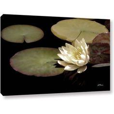 ArtWall Linda Parker Water Lily I Gallery-wrapped Canvas, Size: 16 x 24, Green