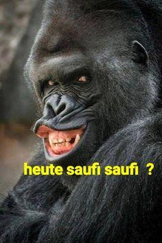 Die 14 besten Bilder von Affen   Fanny pics, Funny animals und Funny ...