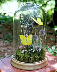 Butterfly Gifts Real Preserved Butterfly by TheAmateurNaturalist – Terrarium Dried Flowers, Blue Flowers, Exotic Flowers, Cloche Decor, Butterfly Lighting, Jar Art, Butterfly Gifts, Apothecary Decor, The Bell Jar