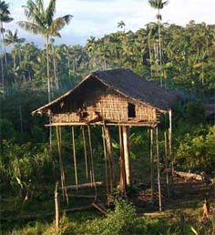 Google Image Result for http://www.busyboo.com/wp-content/uploads/2008/04/papua-tree-houses-2.jpg