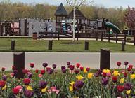 Hawk Island Park Island County, Island Park, County Park, Michigan, Plants, Plant, Planting, Planets