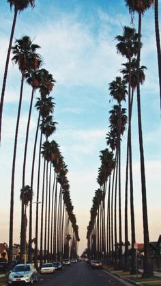 palm trees and open skies