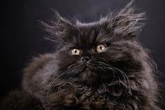 cat by Krzysztof Serafiński on 500px
