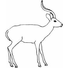antelope coloring sheet