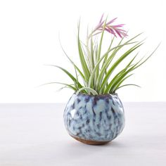 This is a listing for one small modern planter ideal for air plants or succulents. Each one is hand pinched from a ball of clay until it is a perfect little pod. They are left unglazed to look organic and the color looks lovely with air plants. Unglazed planters also serve a utilitarian purpose as they will absorb water so that your air plants dont rot. The air planter is about 3-4 in diameter (not including height of plant). It is adorable and makes a lovely gift for any home. They are…