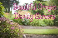 Display Gardens @ Bauman Farms in Gervais OR