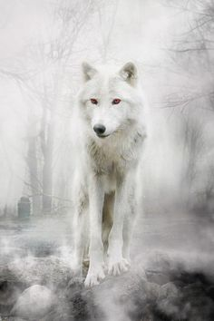 Wolf Art Print by Liancary