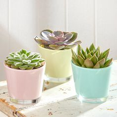 Trio of succulents in pastel glass pots                              …