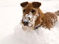 I love snow !
