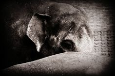 Hide by Linlith on DeviantArt My Portfolio, Berlin, Nature Photography, February, Deviantart, Dogs, Animals, Zoological Garden, Animales