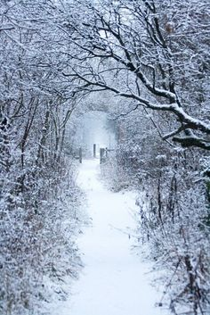 **Snowy lane