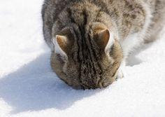 winter | Animal Cognizance