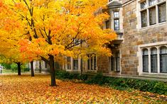 University of Michigan Law School/Quad, Ann Arbor: Fall Tree. Go Blue!
