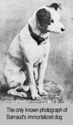 RCA dog Nipper. He was named Nipper because he was known to nip people. Yup sounds like a jack to me!