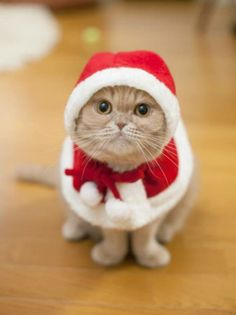"HEY YO SANTA! GIMME A BOX OF KITTY LITTA! ""I'm sorry pussy cat, you've been naughty this year."" FRRRREEEEEAAAAKKKKKKZZZZZ!!!!!!!"