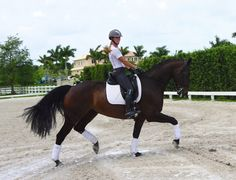 Young Talented 2010, 16.1 hd, imported Hanoverian gelding with Olympic bloodlines and huge future ahead. Extremely trainable. Super safe and easy going for an AA rider, but talented enough for a pro! $125,000