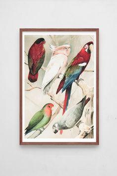 Dybdahl - Poster A3 Parrots 1 large-1