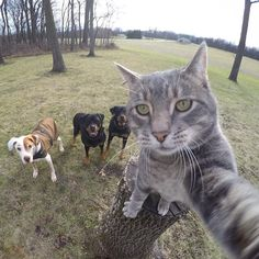Manny the cat loves to take selfies, or at least fondle GoPro cameras. According to Instagram user @yoremahm, Manny learned to use the camera by chance when it reached out to touch the camera during a shoot one day. Now, Manny's selfies have become an Internet sensation.
