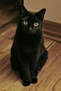 =^.^= Black Cat