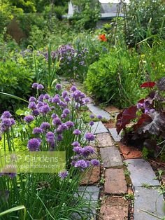 Garden design, pin example 3301805772 for one superb garden. Veg Garden, Edible Garden, Garden Paths, Side Garden, Types Of Grass, Types Of Plants, Path Edging, Stone Landscaping, Landscaping Ideas