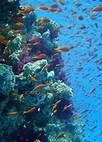 the great barrier reef pictures - Bing Images