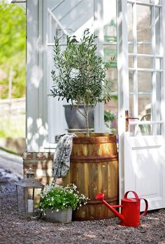 Beautiful garden elements! Especially love the #olivetree in the #wine barrel. So #mcevoyranch