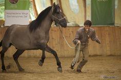 Körpersprache im Pferdetraining! Arien Aguilar erklärt im Interview die wichtigsten Basics.