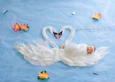 Amazing photo of beautiful newborn baby girl sleeping on the back of a swan. Two parent swans are forming a heart with their necks. baby scene unique creative gorgeous Baby ImaginArt by Angela Forker Precious Baby Photography Fort Wayne New Haven Indiana
