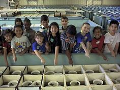 NOAA Sea Turtle Facility     • Research includes improvements in husbandry techniques, feeding, growth, pathology, tagging, sea turtle strandings, and the treatment and rehabilitation of sick and injured turtles.  • Located one block from the Gulf of Mexico on Galveston Island.  • The only federal facility in the United States dedicated to captive rearing of sea turtles    FREE tours are given on Tuesdays, Thursdays, and Saturdays at 10am, 11am, 1pm and 2pm. Call for tour appointments.
