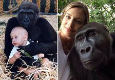 A relação entre a jovem Tansy Aspinall e os gorilas sempre foi, desde sua primeira infância, uma relação baseada no afeto e na liberdade. Tendo crescido ao redor desses impressionantes animais no Howletts Wild Animal Park em Kent, na Inglaterra – participando do trabalho da Fundação Aspinall, de sua família, de reabilitação dos gorilas, para depois devolve-los à vida selvagem – Tansy e os gorilas acabaram criando uma verdadeira relação de amizade. Dois gorilas em especial marcaram a vida e a…