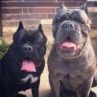 Bobsey Twins - Dog of the Week Candidate - PuppyDogSwag.com   Repin to Vote!