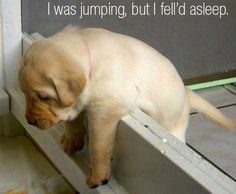 I tried to jump, but fell asleep!