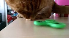 Animated Photo This kitty knows what to do with a fidget spinner!