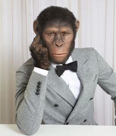 """Chimp Chic: """"Planet of the Apes"""" Ringleader Caesar Models High-End Menswear Monkey Pictures, Animal Pictures, Funny Pictures, Dawn Of The Planet, Planet Of The Apes, Photos Singe, Funny Animals, Cute Animals, Monkey Art"""