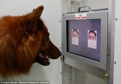 Dogs can read emotions from your face   http://www.dailymail.co.uk/sciencetech/article-2951198/Dogs-tell-FEELING-Man-s-best-friend-read-emotions-written-faces-study-finds.html