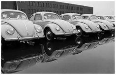 Volkswagen 1951