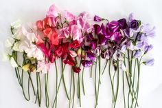 Summer Flowers, Dream Garden, Garden Planning, Flower Power, Glass Vase, Plants, Outdoor, Design, Gardens
