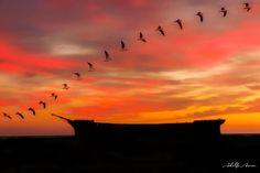 #surreal #surrealist #surrealism #abandonedship #abandoned #abandonedplaces #dream #dreams #birdsflying  #birds #boat  #boats #sunset #sunsets #sunrise #sunrises #marjorieglen #barcos #gaviotas #seagull #seagulls #sky #nubes #cloud #siluetas #siluet #amanecer #amazing #atardecer